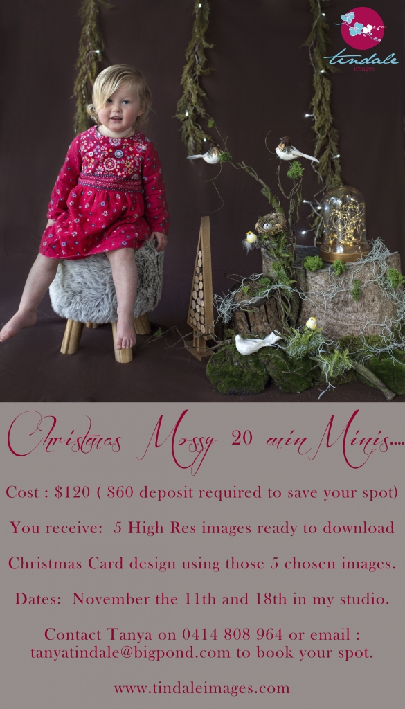 Christmas Mossy Minis 585x1024 Christmas mini sessions announced... now also the week of the 13th till the 18th ...