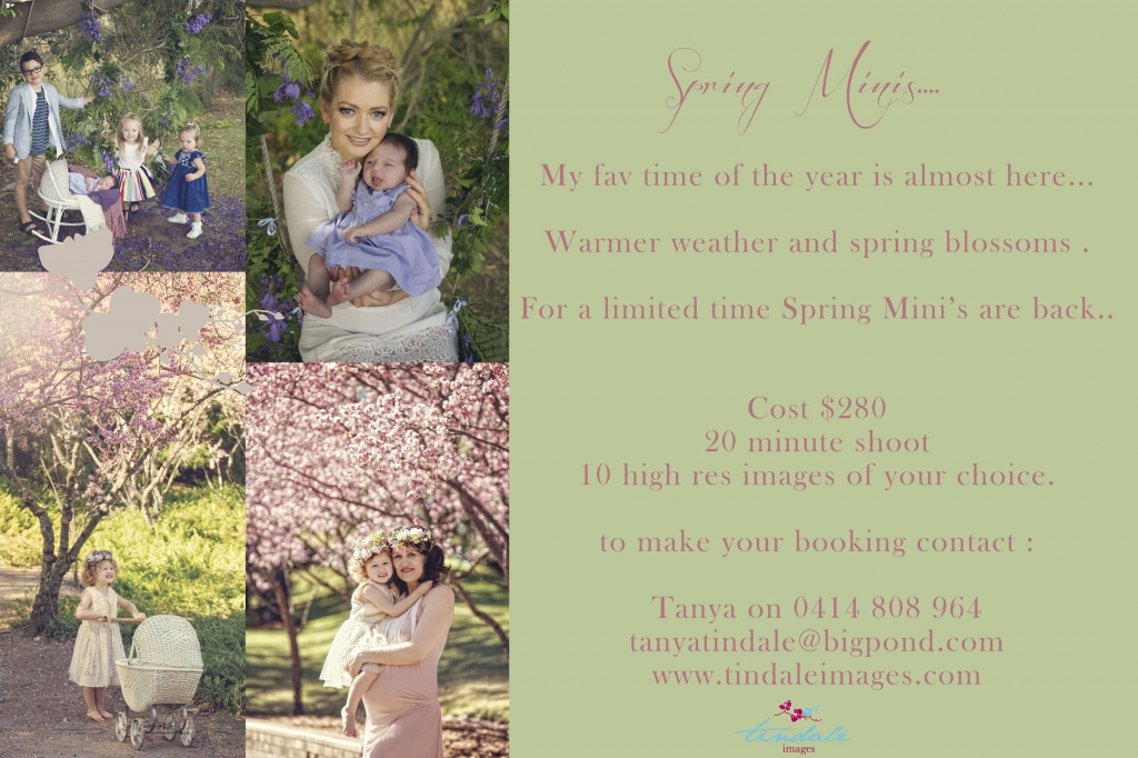 spring minislowres 1024x682 Christmas mini sessions announced... now also the week of the 13th till the 18th ...
