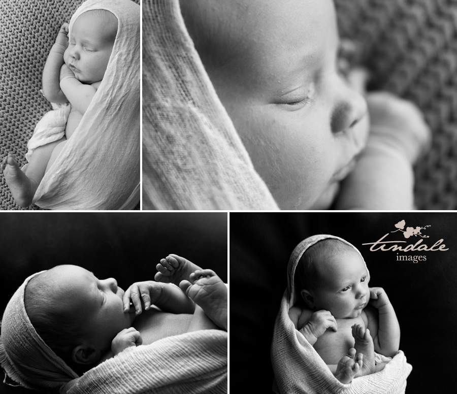 8 day old delight - sutherland shire newborn photographer
