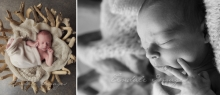 brothers - sutherland shire newborn photographer