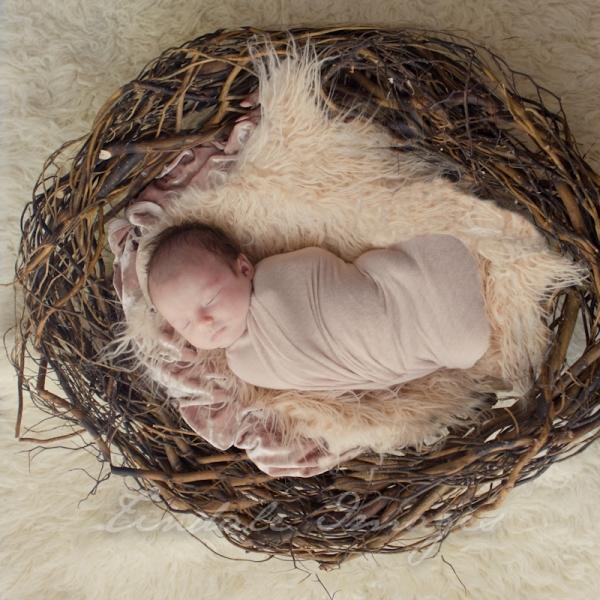 sweet - sutherland newborn photographer