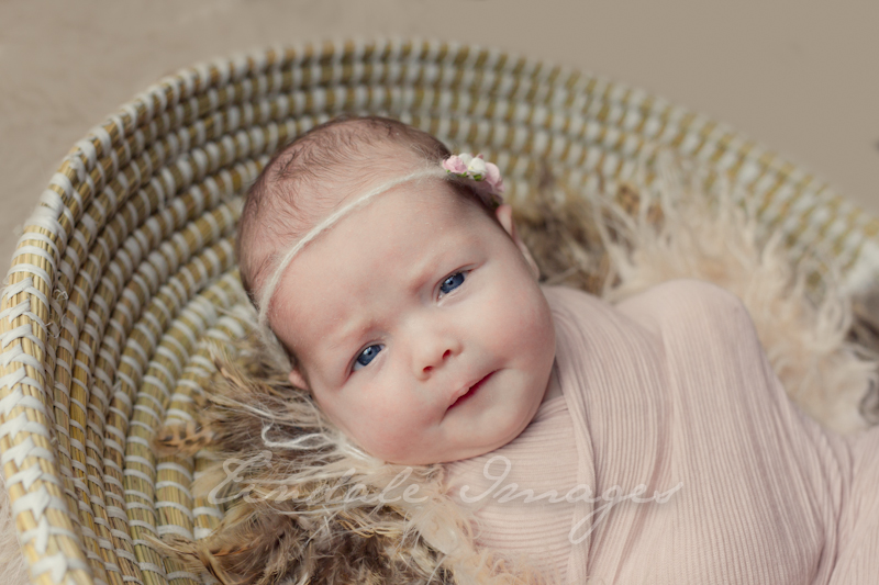 blog 851 sisters   sutherland shire newborn photographer