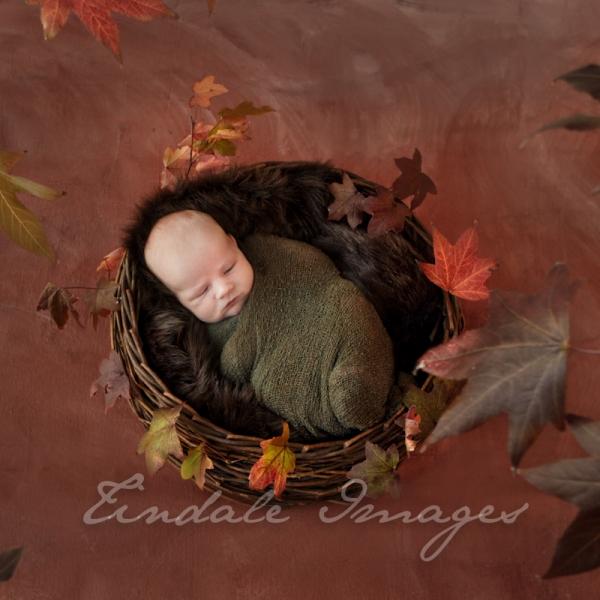 autumn baby - sutherland shire newborn photographer