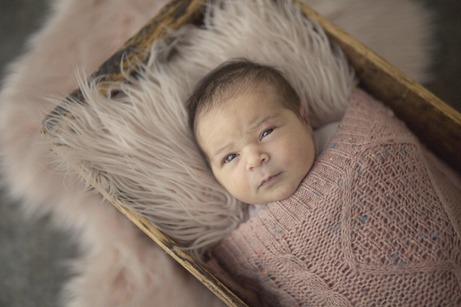storyboard 41 beautiful little missy   sutherland shire newborn photographer