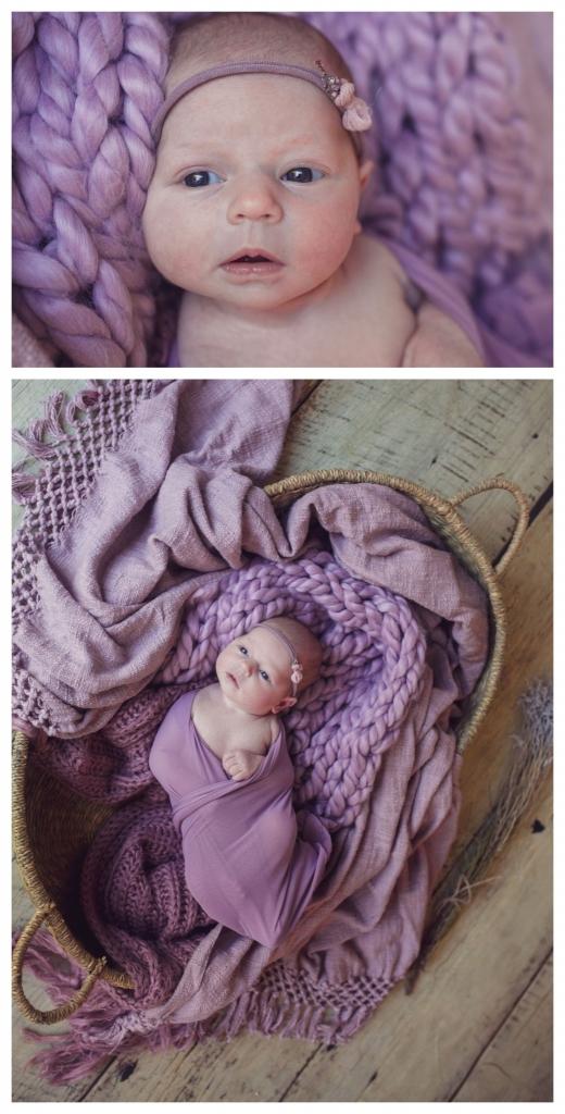 BeFunky collage 533 520x1024 english rose   Sutherland shire newborn photographer